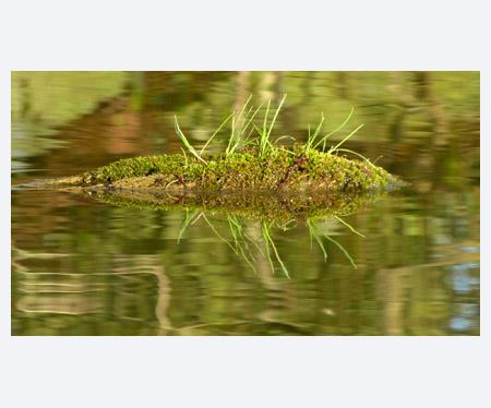 Submerged log